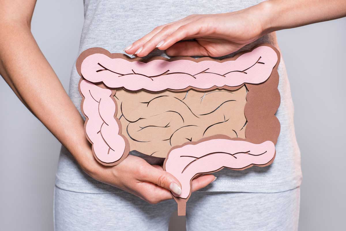 Gut System for Protecting Brain Health